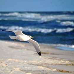Медитация Освобождение от Стресса