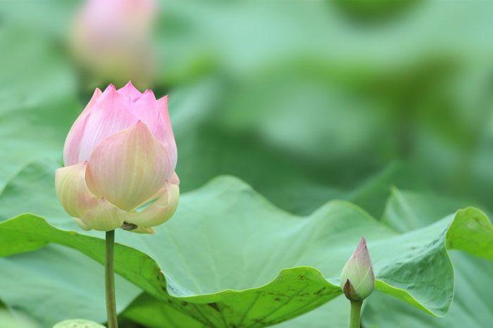 Медитация для Раскрытия Женского Творческого Начала